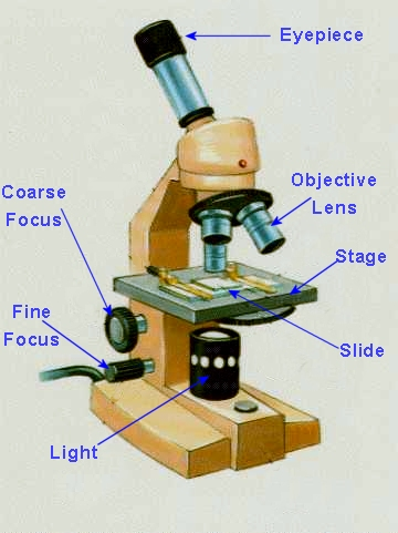 Dissecting the Parts of a Microscope - Life123