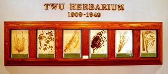 Herbarium Native Plant Specimens