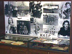 Wasp exhibit