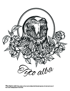 A barn owl coloring sheet with the scientific name below it.
