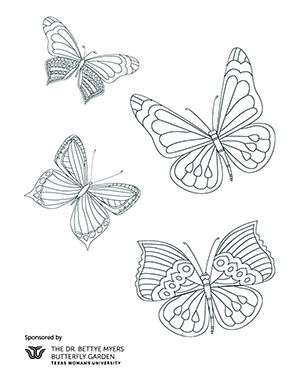 A coloring sheet with four butterflies on it.