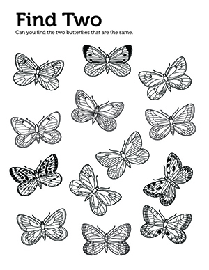A coloring and activity sheet with butterflies on it.