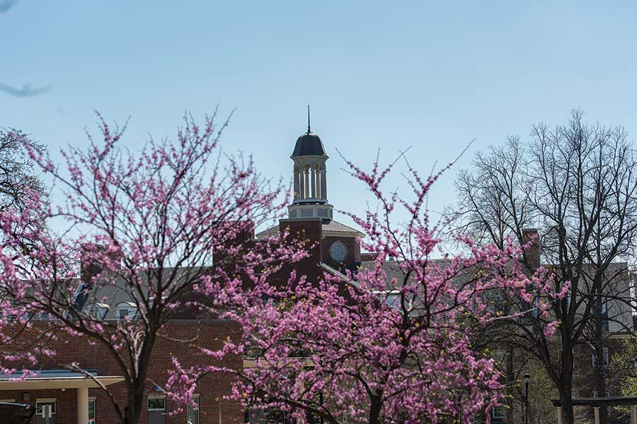 Redbud trees blooming on the Denton Campus