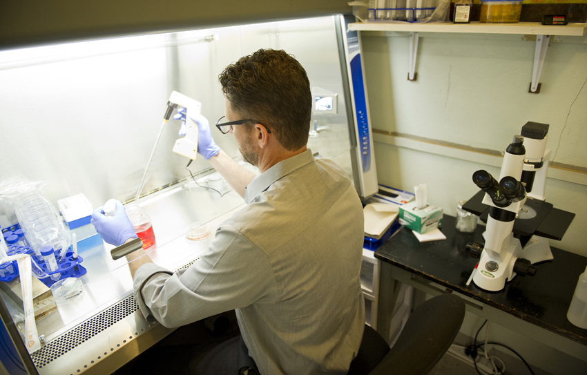 Assistant professor Christopher Brower, Ph.D., conducts lab research.