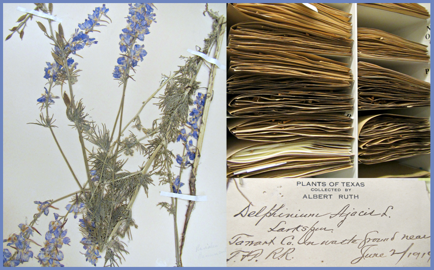 Herbarium photo collage including 1 specimen, 1 label and specimen files
