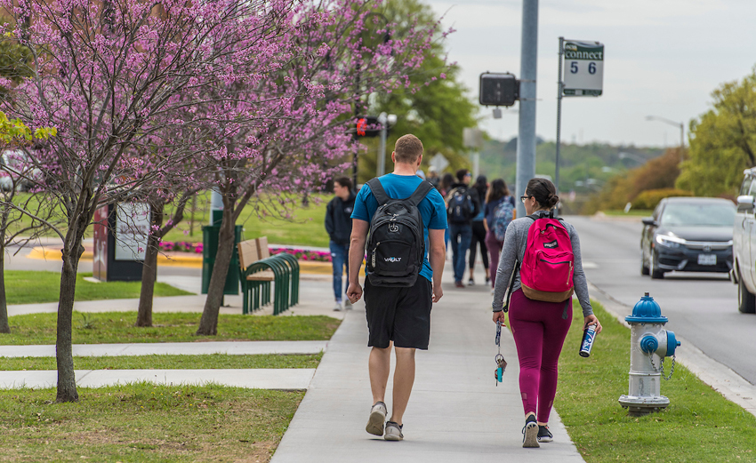 Students walking on the TWU campus near redbuds in bloom